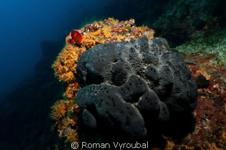 reef in the shadow insatiable sponge :-( by Roman Vyroubal