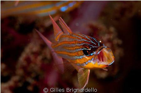 pura island, Alor Archipelago. just lucky... by Gilles Brignardello