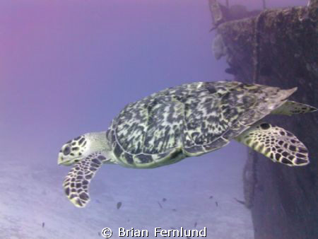 Turtle and C-51 Wreck by Brian Fernlund