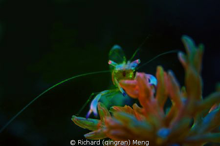 Neon shrimp by Richard (qingran) Meng