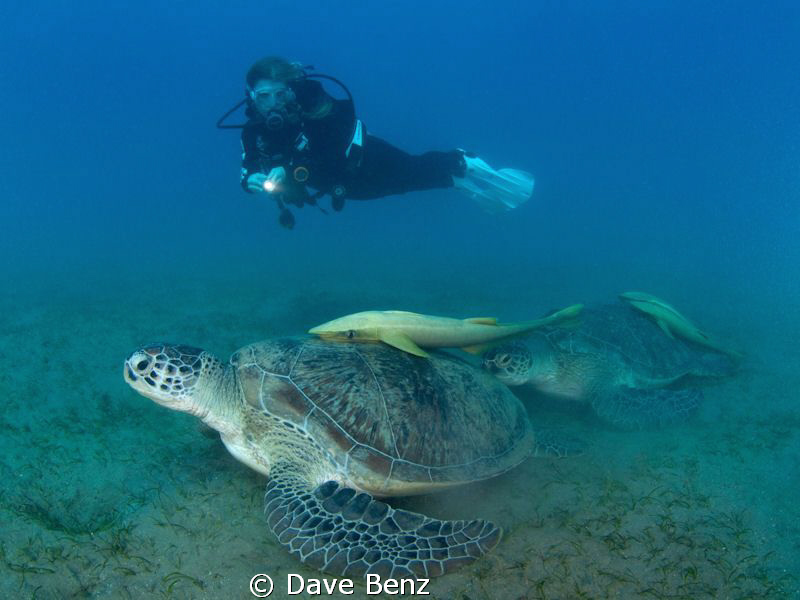 Amazing meeting with a big turtle... by Dave Benz