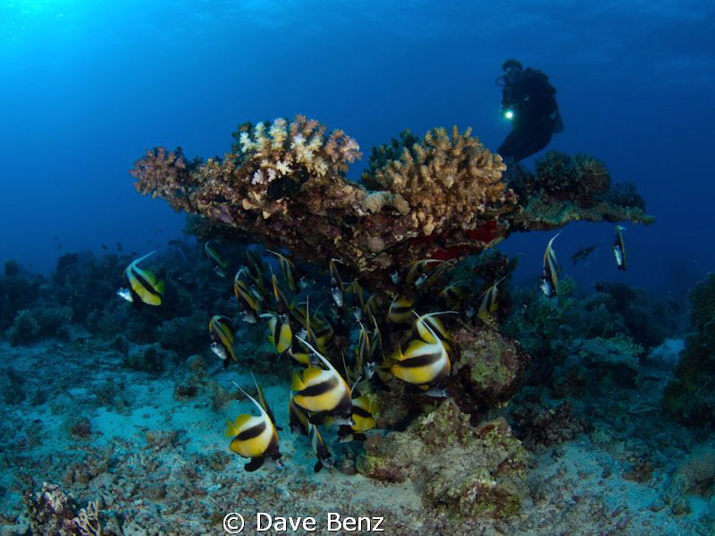 """Great dive at divespot """"Dolphinhouse"""", Marsa Alam. by Dave Benz"""