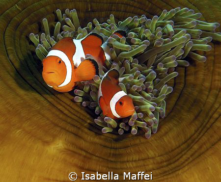 """""""Couple for life"""" by Isabella Maffei"""