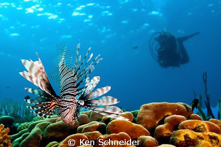 We were finishing our dive; as we turned to swim to our e... by Ken Schneider