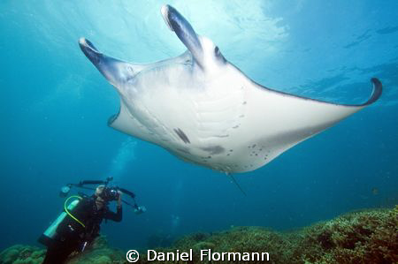 Manta photographer by Daniel Flormann