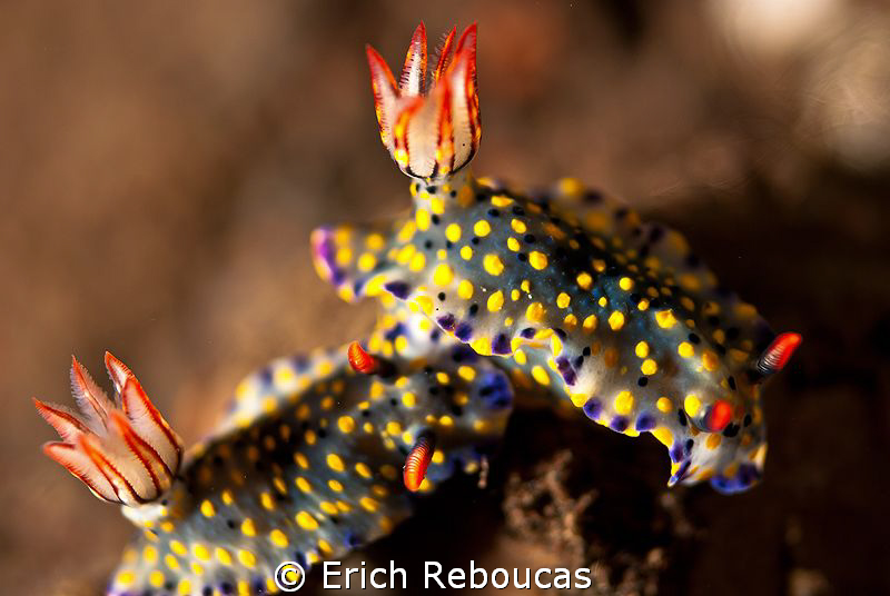 Nudi Love. 