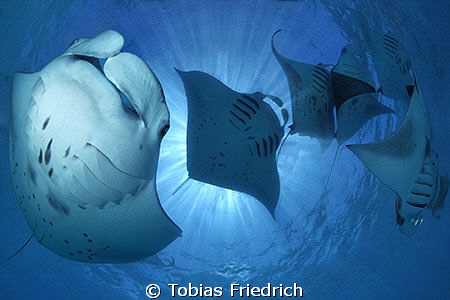 """Manta Madness"" - lot's of Manta Rays around in Hanifaru ... by Tobias Friedrich"