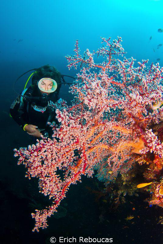 Diver and sea fan by Erich Reboucas