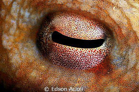 Eye of octopus. by Edson Acioli