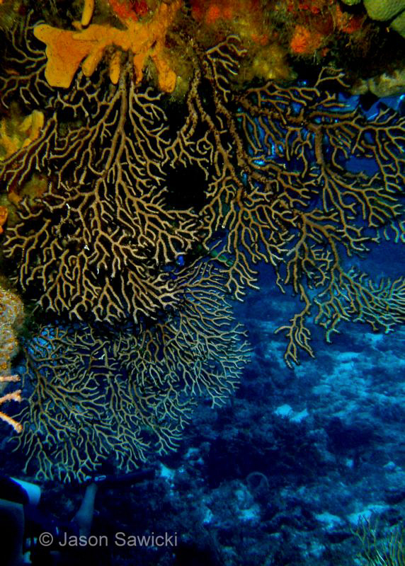 Interesting and beautiful coral formations in Cozumal at ... by Jason Sawicki