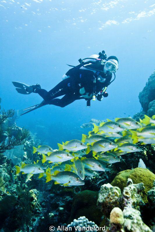 Seascape at Randy's Gazebo, Little Cayman. by Allan Vandeford