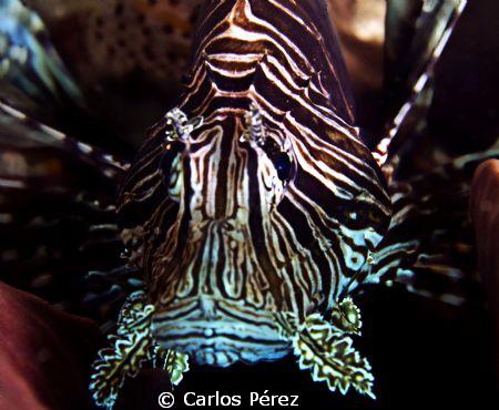 Face to face by Carlos Pérez