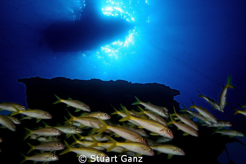 "Looking up from the shipweack ""Mahi"" on Oahu's West side. by Stuart Ganz"
