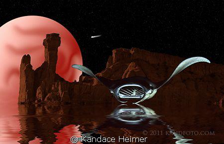 I shot the manta ray on the Kona Night Manta dive. I shot... by Kandace Heimer