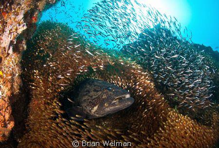 Potato Bass & Glass Fish  by Brian Welman