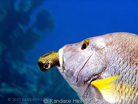 In all my years of diving, I have never seen, let alone p... by Kandace Heimer
