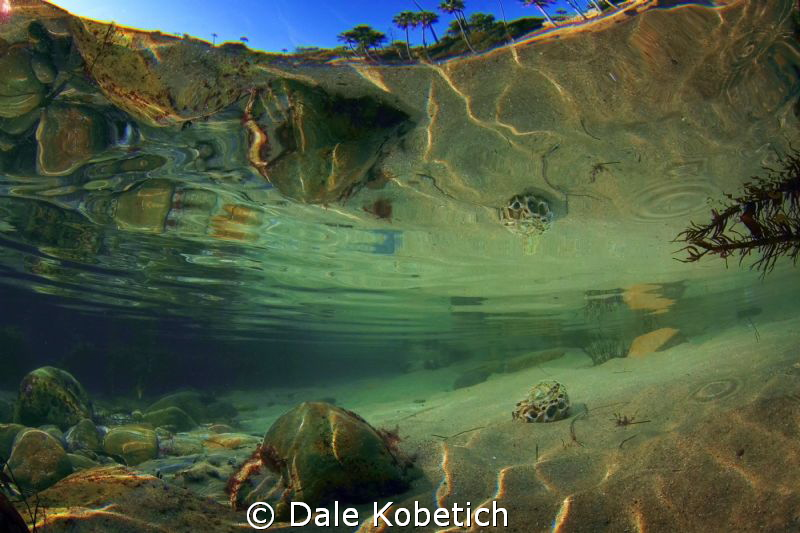 Afternoon tide pool reflections..Laguna Beach  home brew ... by Dale Kobetich