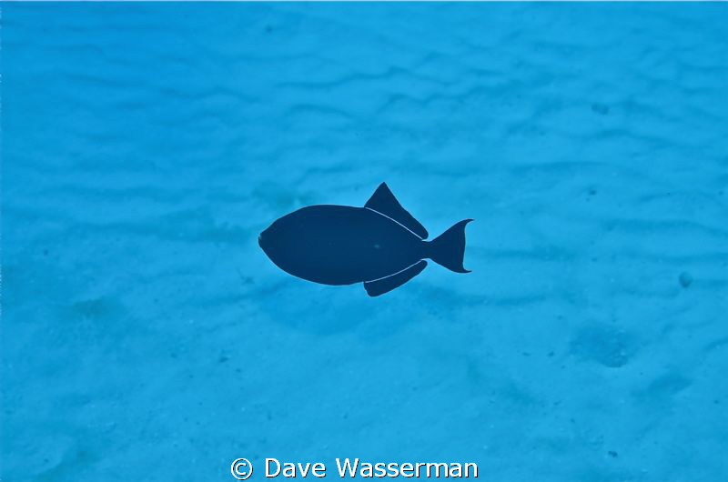 I shot this picture with a Nikon d7000 in a sea and sea h... by Dave Wasserman 