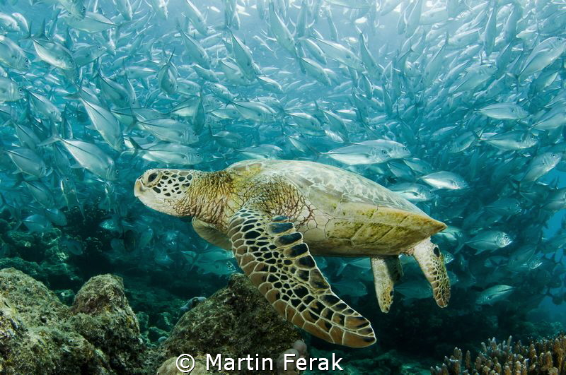Biodensity by Martin Ferak