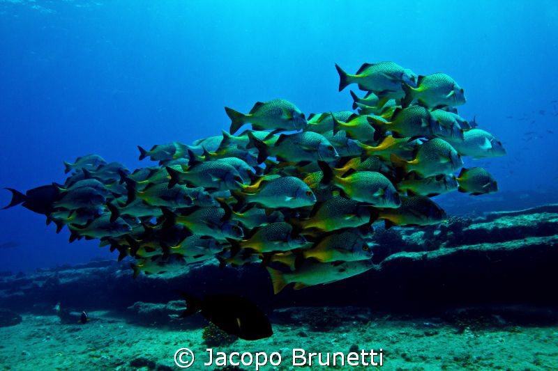 big family by Jacopo Brunetti