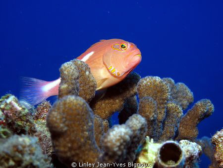 Canon G10 /Hawkfish Mauritius by Linley Jean-Yves Bignoux