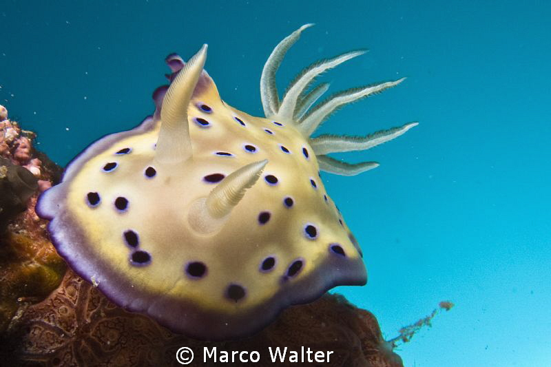 Nudi in the blue by Marco Walter