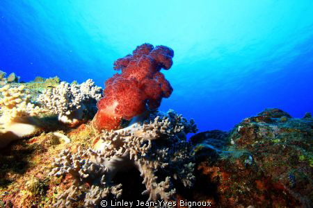 A constant site in the tropical waters of Mauritius EOS 7... by Linley Jean-Yves Bignoux