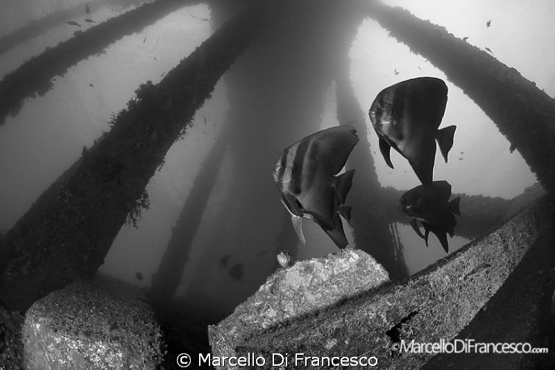 Jetty B&W