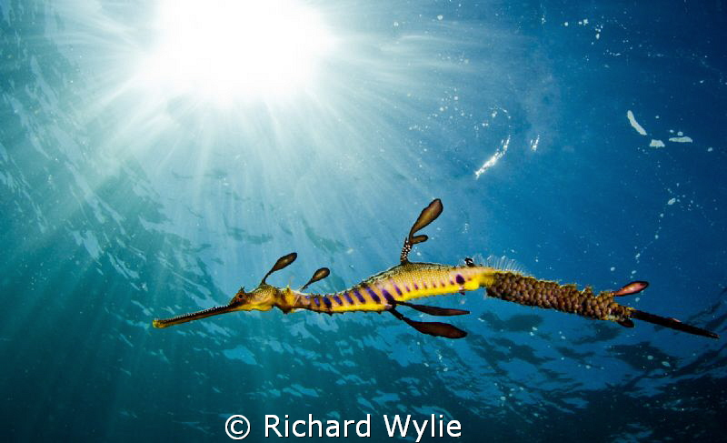 """Dragon in light"". by Richard Wylie"