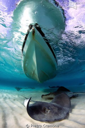 Stingrays at Sandbar, Grand Cayman by Pietro Cremone