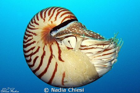 ... magnificent creature!  by Nadia Chiesi