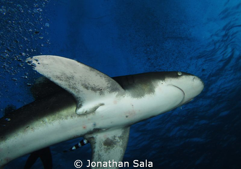 Under the king....