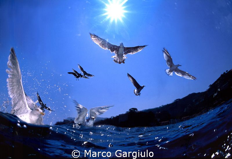 Gabbiani by Marco Gargiulo