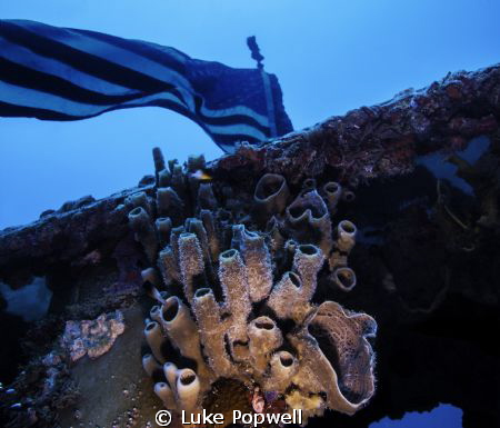 Coral growing below the US Flag on the Spiegel Grove in K... by Luke Popwell