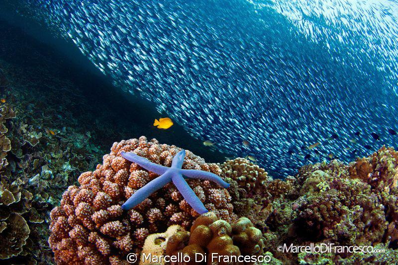 Pescador Island view by Marcello Di Francesco