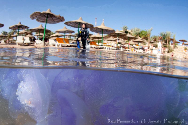One jellyfish is fine....but hundreds ?? by Rico Besserdich