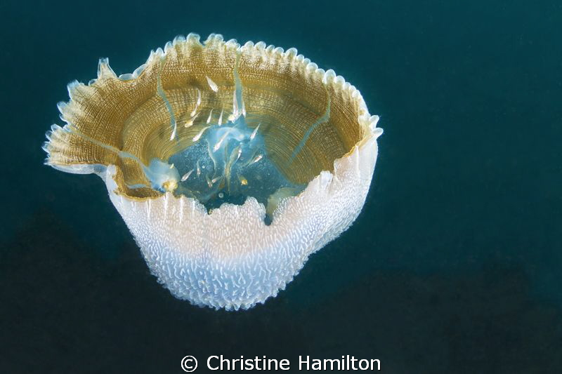 Jelly Shelter