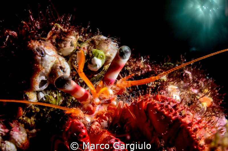 Hermit Crab double exposure in camera by Marco Gargiulo