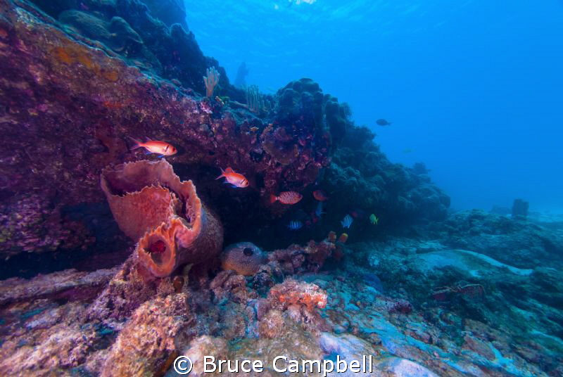The wreck of the Berwyn had many different fish and is co... by Bruce Campbell
