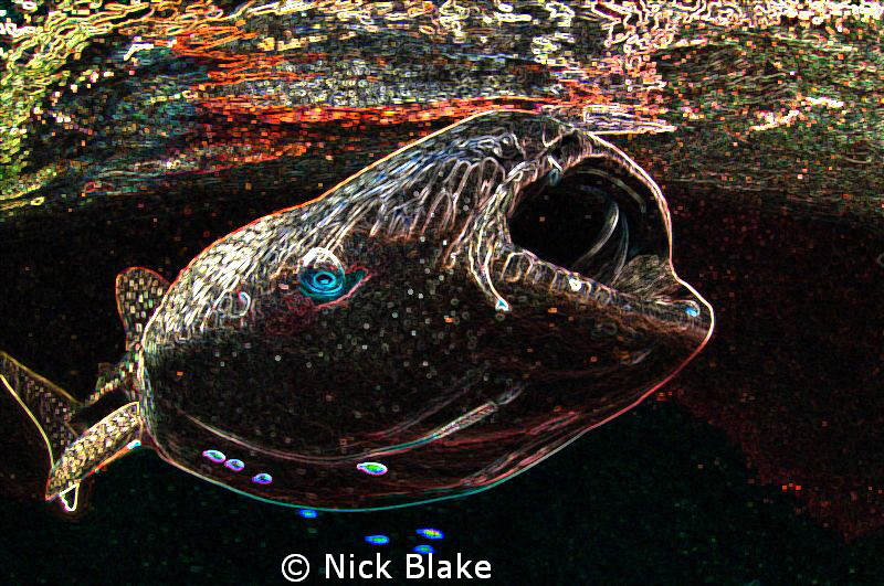 A somewhat different take on a close up shot of a Whalesh... by Nick Blake