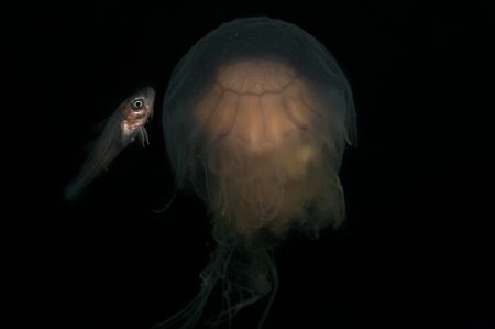 Fish meets Jellyfish. by Spencer Burrows