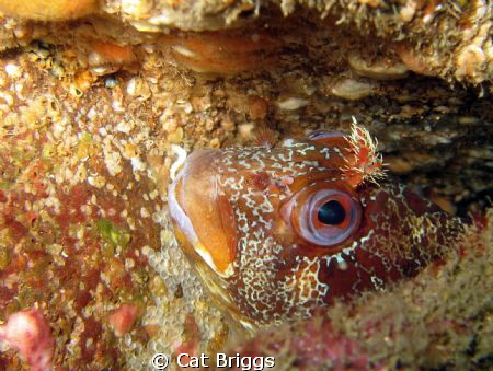 Peek a boo