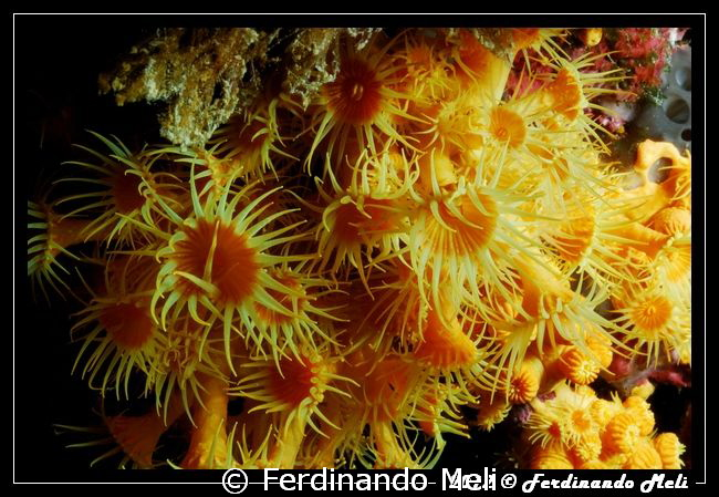 Flowers of the sea. by Ferdinando Meli