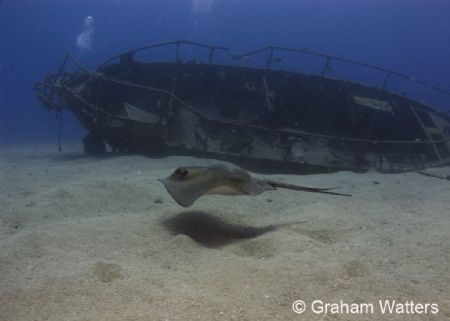 Stingray swimming by a wreck in Tenerife by Graham Watters