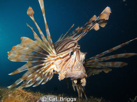 Lionfish on the El mina wreck Hurghada