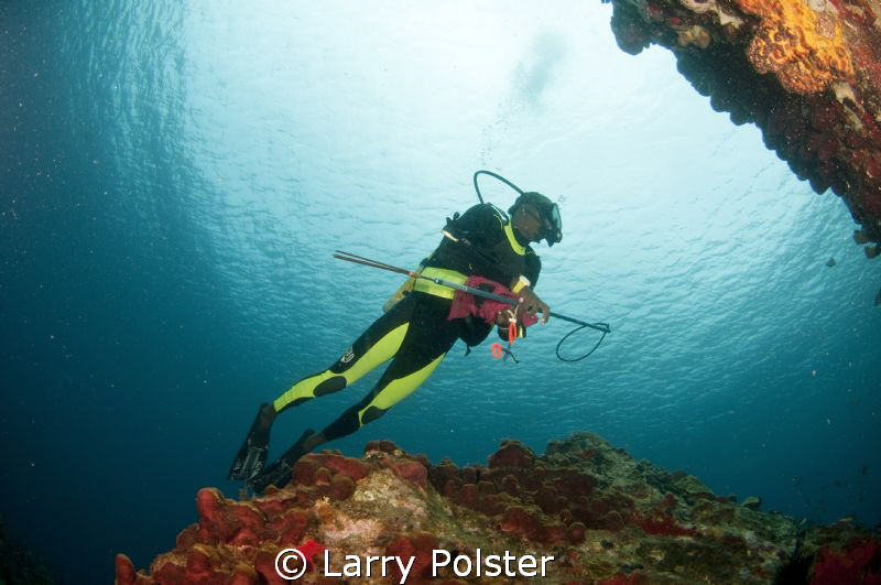 Diver with spear elimination some of the many lionfish in... by Larry Polster