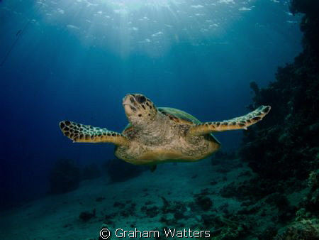 A turtle shot in Sharks Bay Egypt by Graham Watters