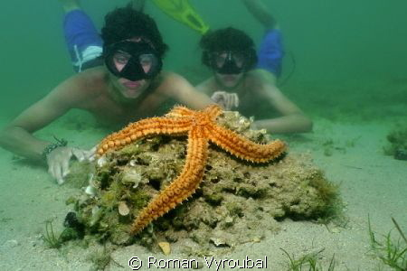Starfish.  The wonder is how beautiful and great guys to... by Roman Vyroubal
