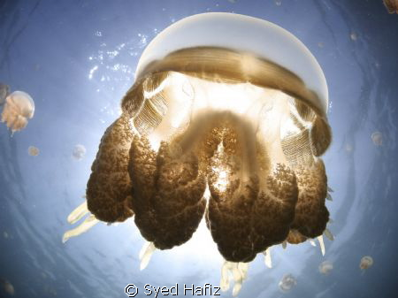 Kakaban Jellyfish Lake. by Syed Hafiz