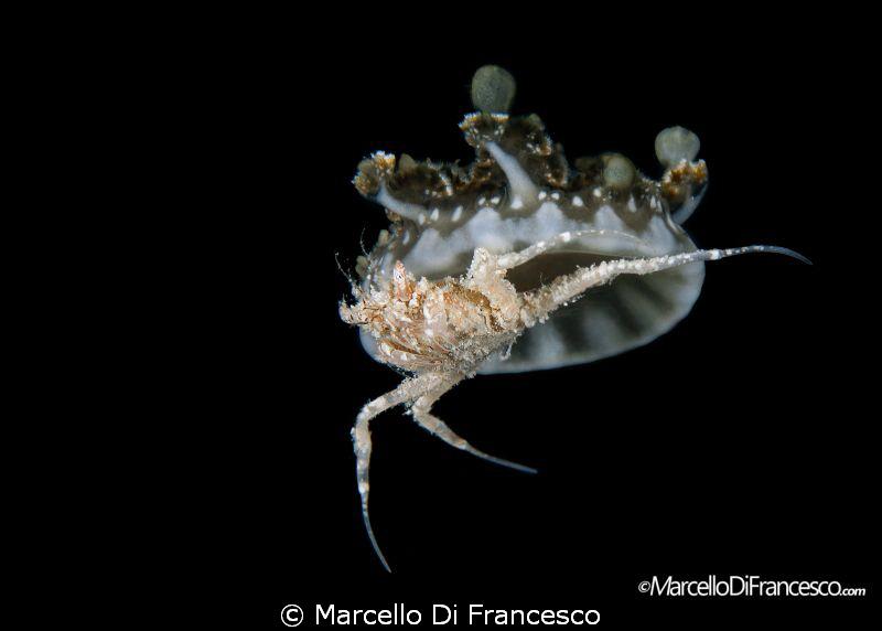 skydive by Marcello Di Francesco